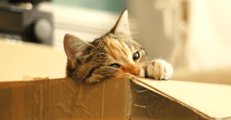 Kat in doos